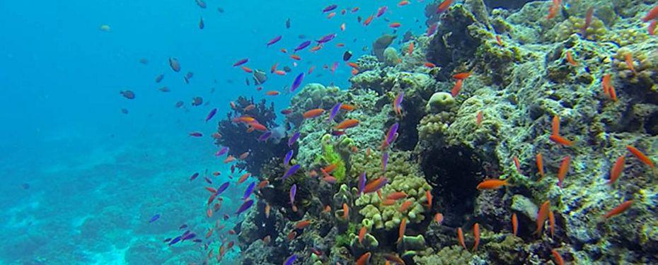 Lumanhlile Island
