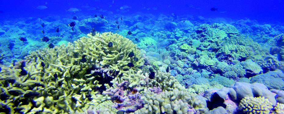 Tikihau, Tuamotu Archipelago