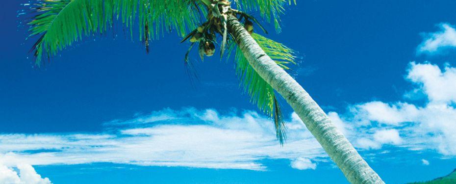 Tsoi Island