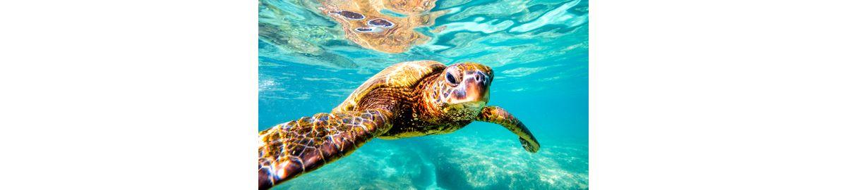 Luxury Cruise From Baltra Galapagos To San Cristobal 27 Jul 2019  Silversea