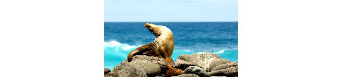 Luxury Cruise From Baltra Galapagos To San Cristobal 10 Aug 2019  Silversea