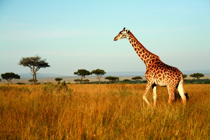 Silversea Africa and Indian Ocean Luxury Cruise