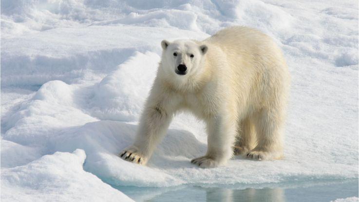 Ártico y Groenlandia