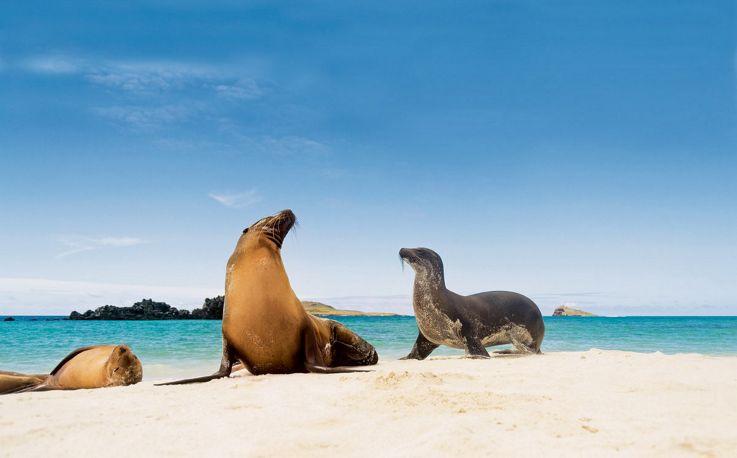 Silversea Galapagos Luxury Cruise