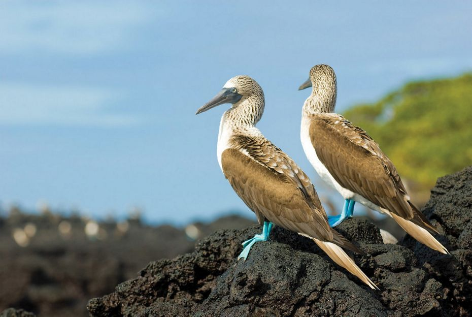Silversea Galapagos Luxury Cruise