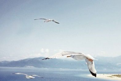 Silversea Transoceanic Luxury Cruise