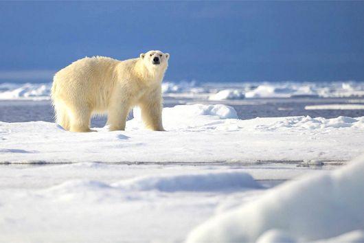Arctique et Groenland