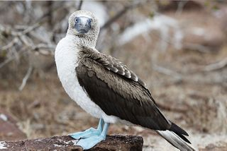SILVERSEA LAUNCHES PIONEERING FUND TO SUPPORT GRASSROOTS  CONSERVATION EFFORTS IN THE GALAPAGOS ISLANDS