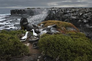 SILVERSEA ANNOUNCES SPECIAL SAVINGS OFFERS FOR GALÁPAGOS EXPEDITIONS
