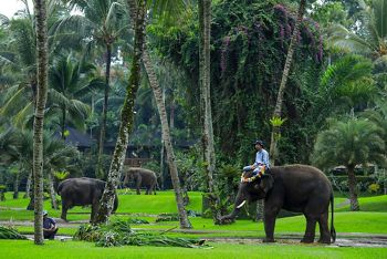 9916 - Bali a Singapore
