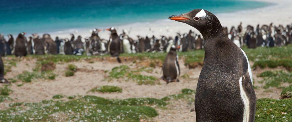 BLEAKER ISLAND (Falklands)