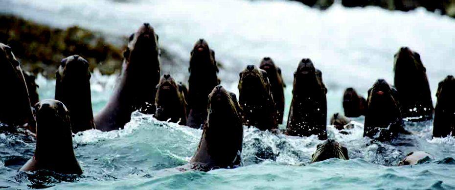 CAPE ST.ELIAS (Kayak Island, Alaska)