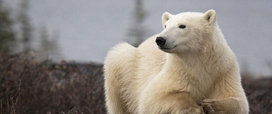 Silversea Luxury Cruises - Churchill Manitoba