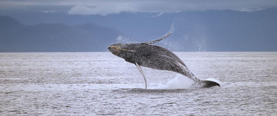 Cruise Frederick Sound, Alaska