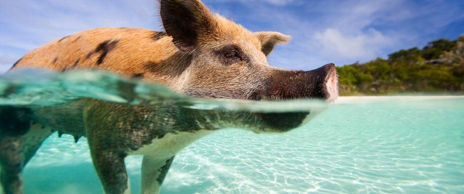 Exuma Island Bahamas