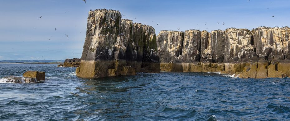 Silversea Luxury Cruises - Farne Islands
