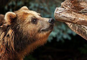 Dating Kodiak Alaska