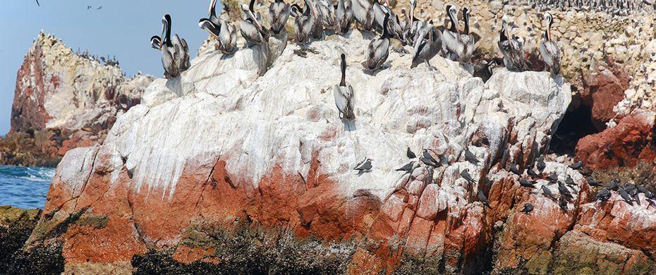 Lobos de Tierra Island