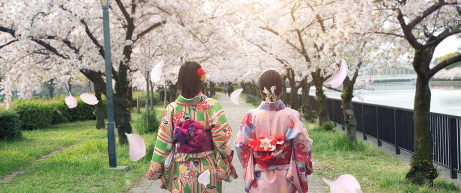 Www.cherryblossom asiatiske dating