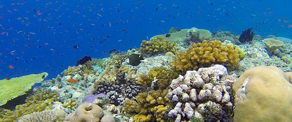 Perumal Par Reef