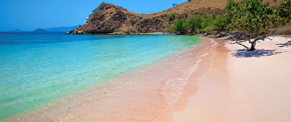 KOMODO ISLAND (Pink Beach)