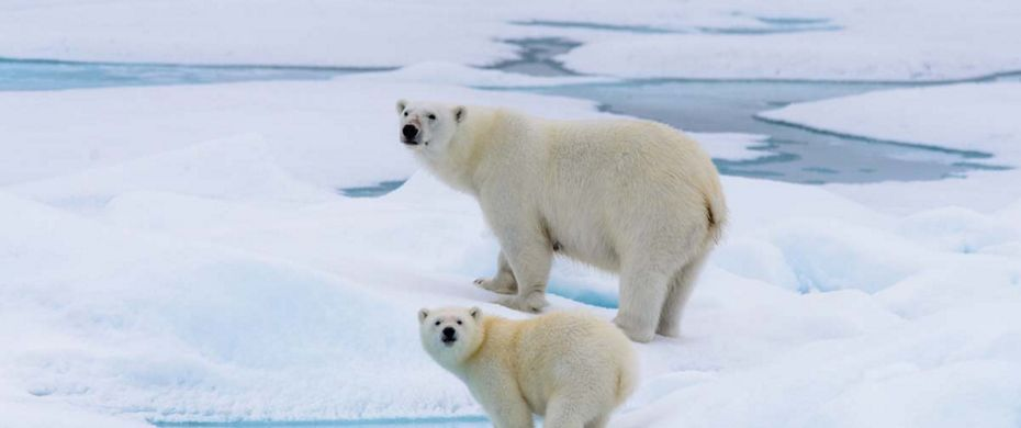 Silversea Luxury Cruises - Svalbard Northern Region