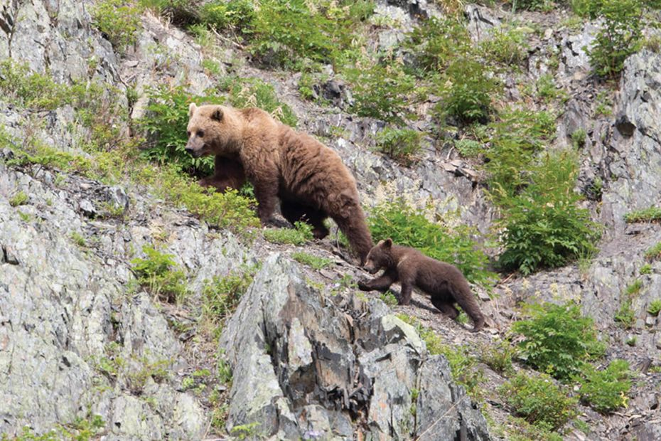 Brown Bears - Tintikyn Lagoon, Kamchatka