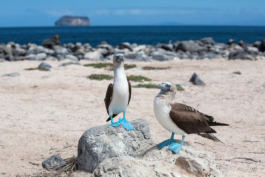 Silversea Small Luxury Cruise Ships - Silver Galapagos